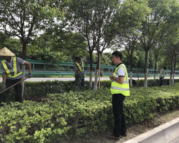 七叶树用于街道绿化