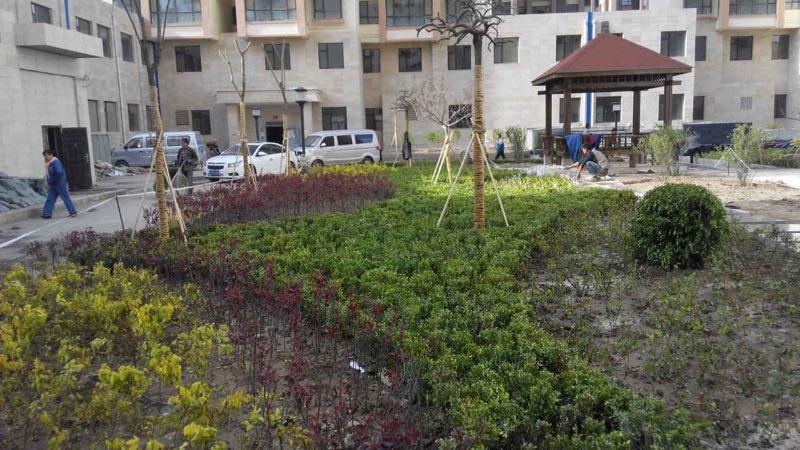 兰州红叶城小区景观绿化工程